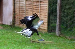 Sec Bird