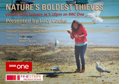 Natures Boldest Thieves BBC TX Card