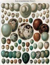 eggsgerman2